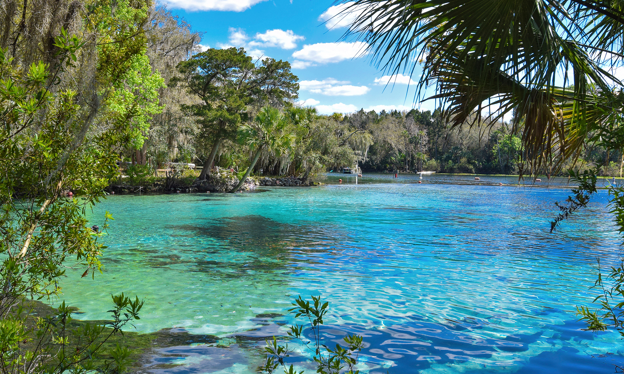 photo of bright blue water of Florida springs