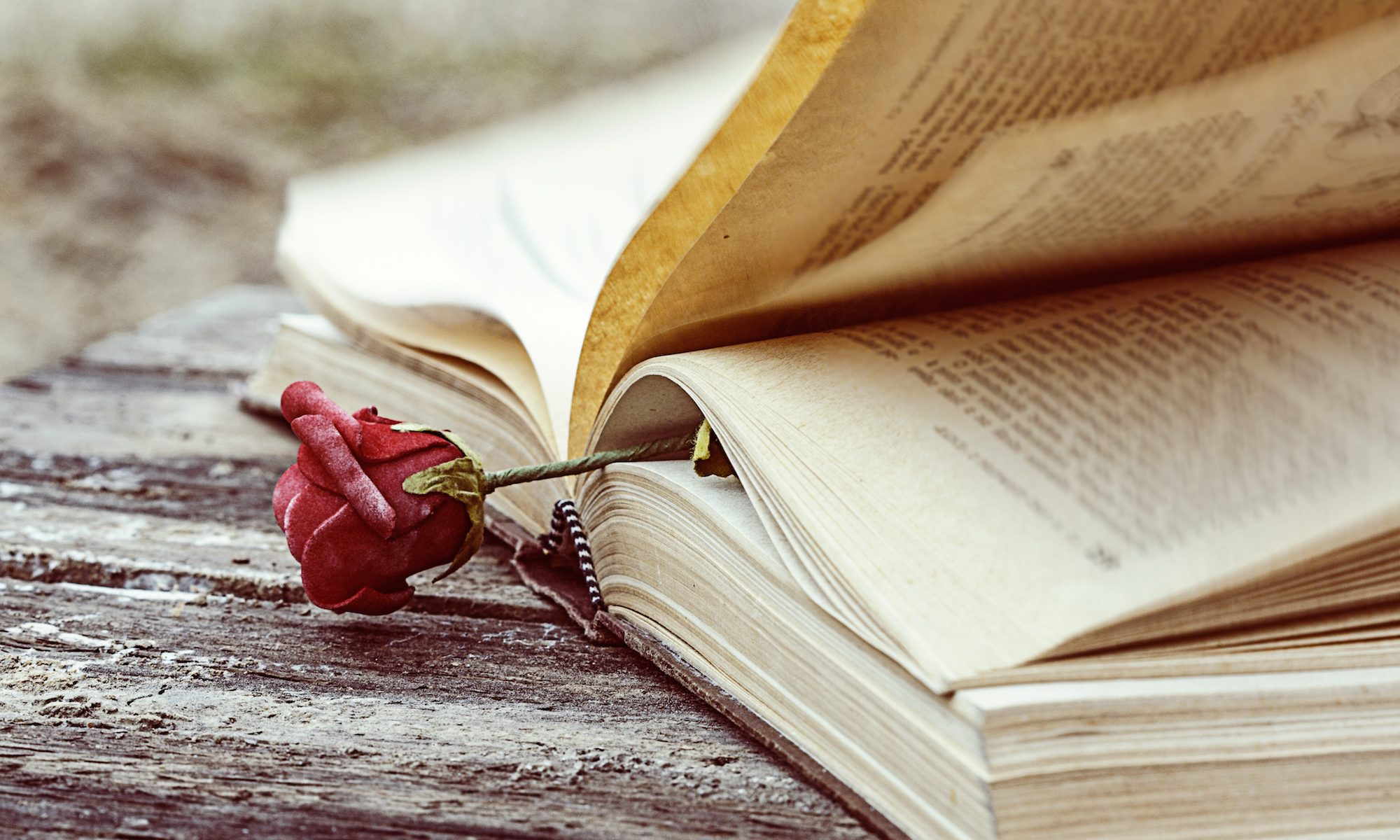 old book open on wood desk with rose tucked into pages
