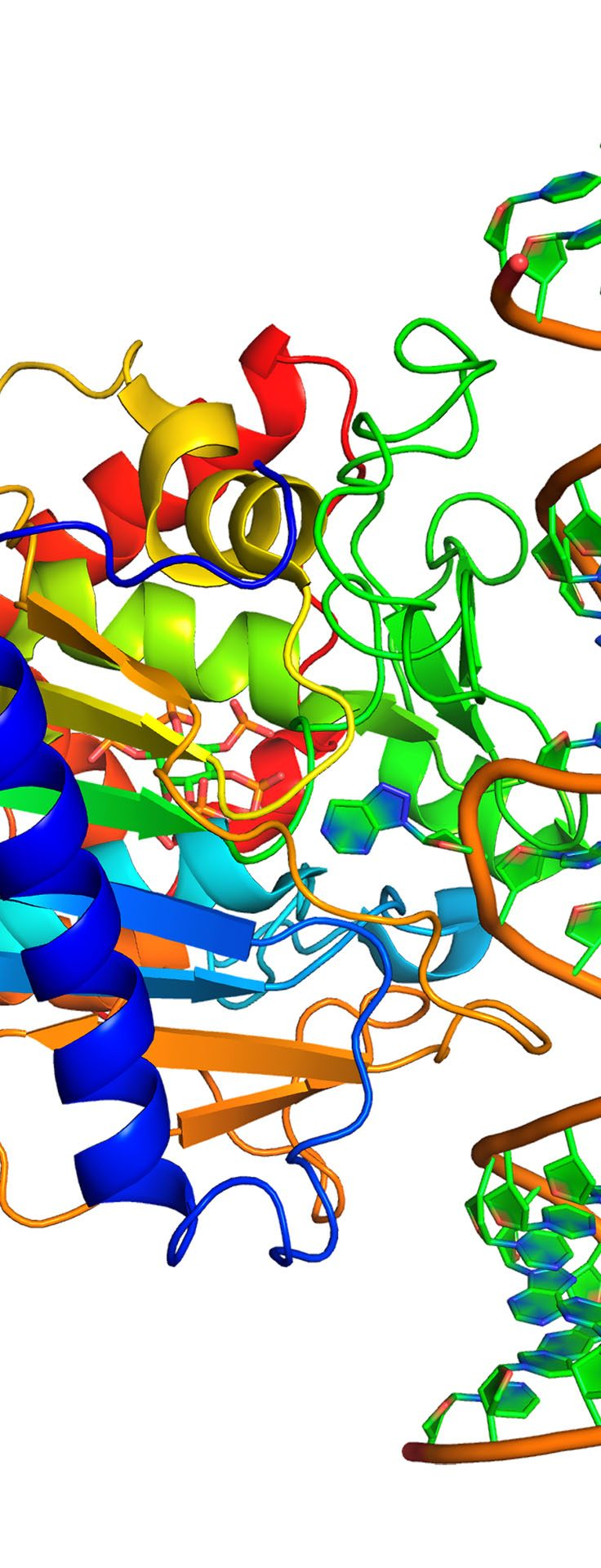 The crystal structure of human ADAR, where dysregulation by Zika may lead to neurological damage