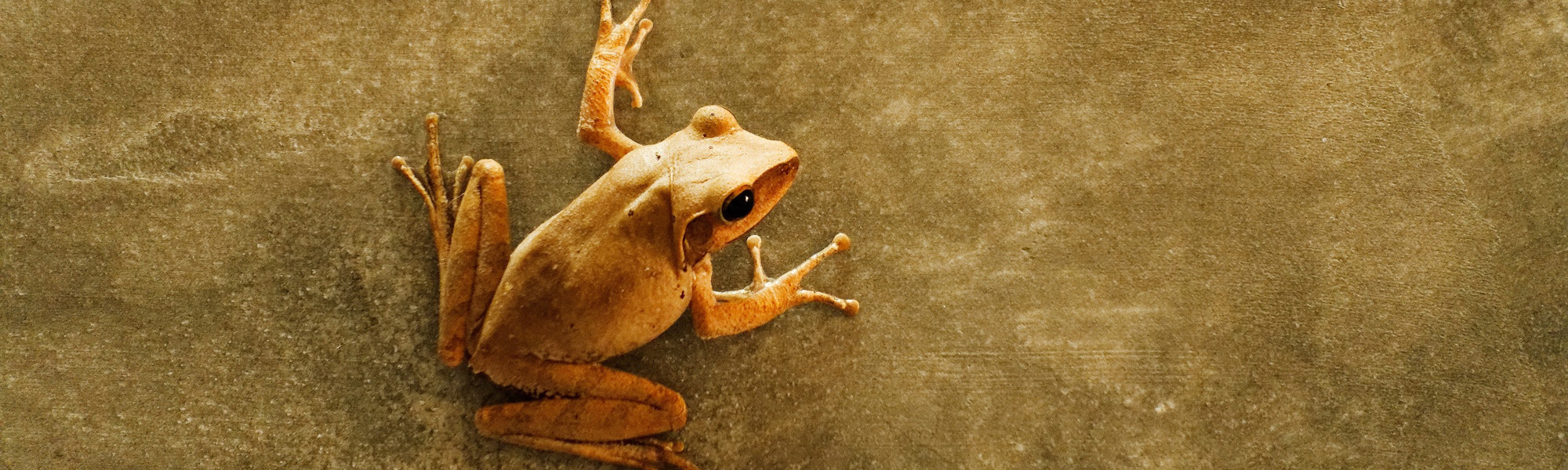 Green frog on a wall